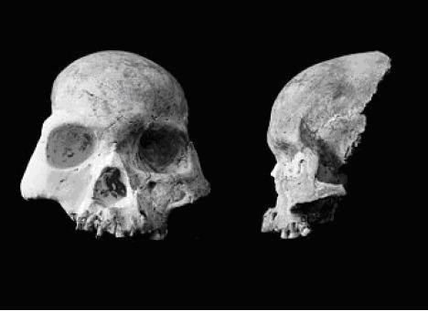 Залишки черепа людини з печери Благородного оленя